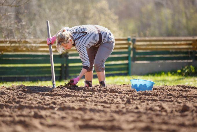 сажать картошку лопатой
